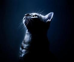 独家视角|猫国寻宝,寻宝,寻宝……